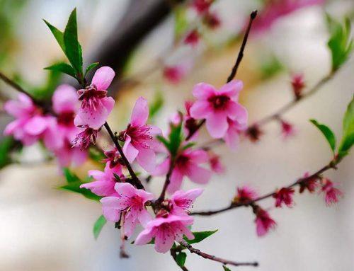 بامداد بهار